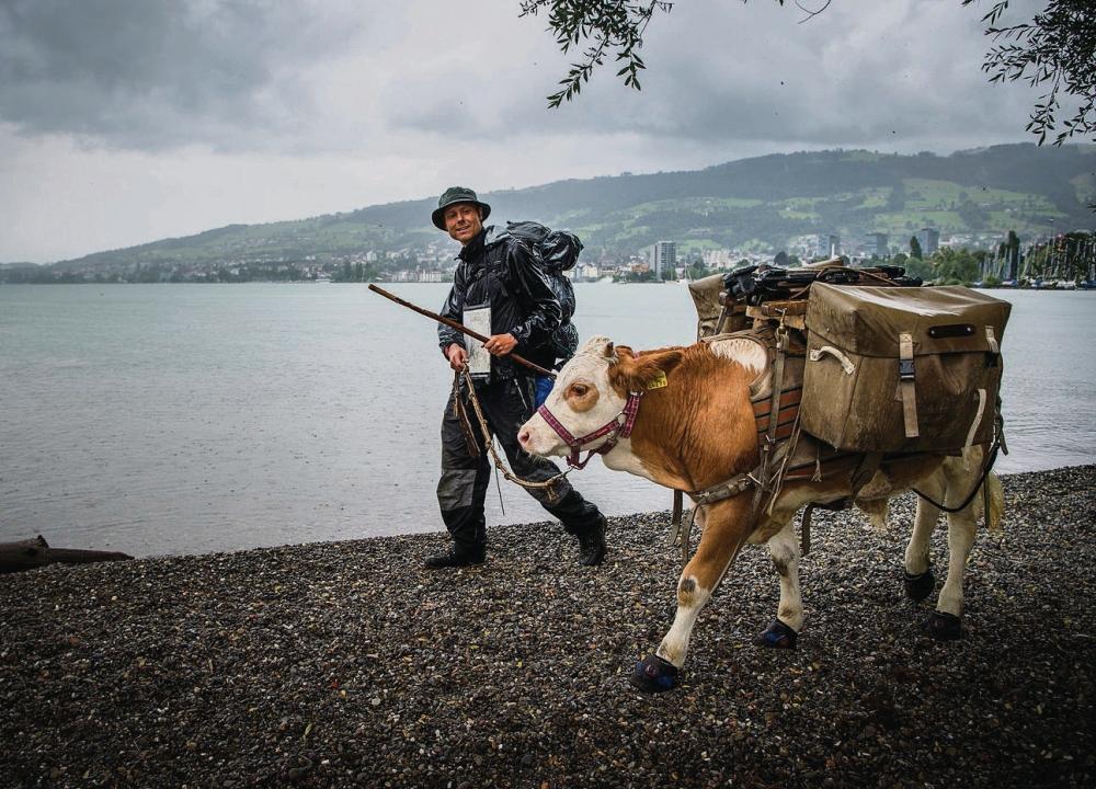 Rorschach Goldach - Gaetan Dübel ist mit seinem Kalb Léo quer durch die Schweiz gewandert.